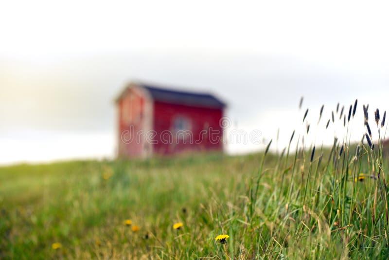 Maskrosor och gräs som växer nära mycket liten röd byggnad i fält royaltyfri fotografi