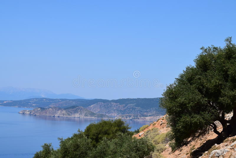 Maslinipe coasta stock foto