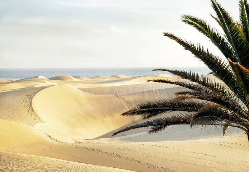 Maspalomasstrand met zandige duinen Gran Canaria, Canarische Eilanden, Spanje De ruimte van het exemplaar stock fotografie