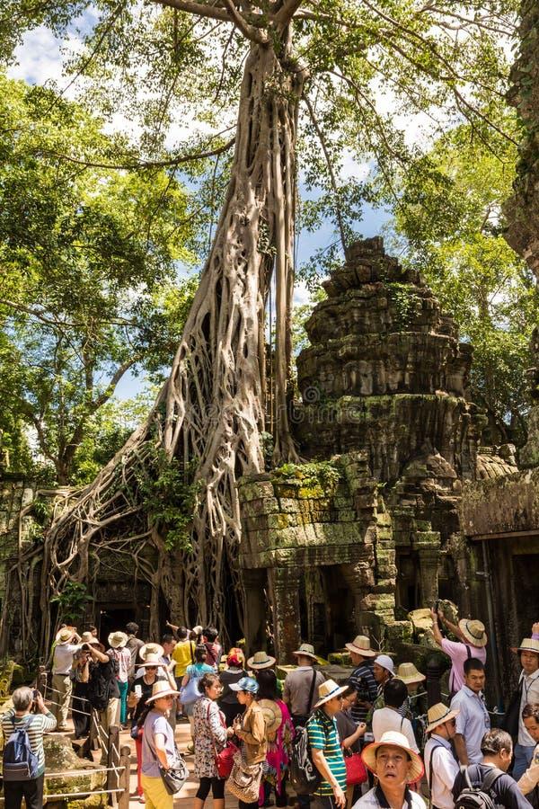 Mass av turister under högsäsong som besöker komplexet för Ta Prohm nära Siem Reap, Cambodja royaltyfri bild