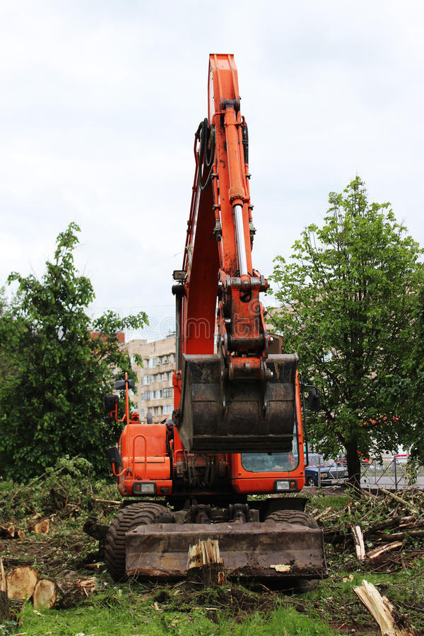 Mass cutting of adult poplars in the city. The excavator with bucket moves the wooden pieces.  royalty free stock photography