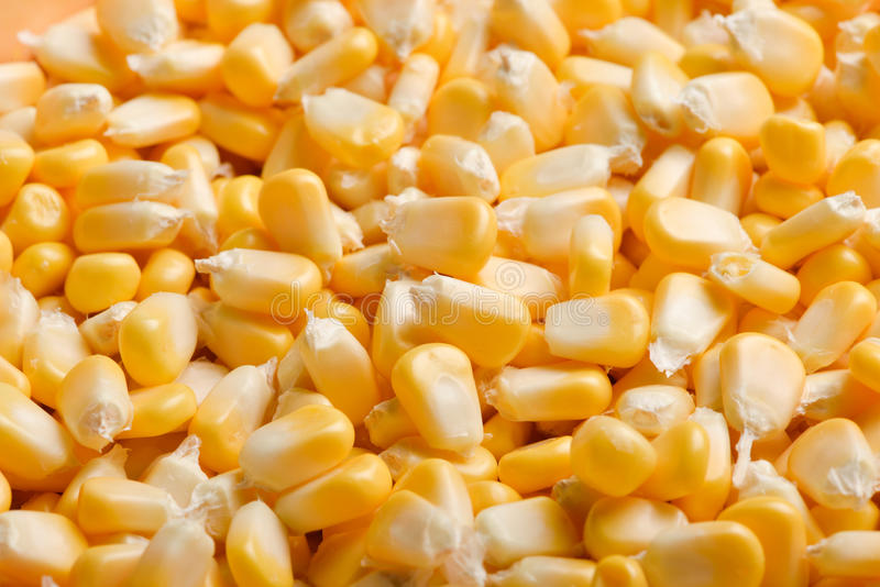 Massa gele graankorrels stock afbeeldingen