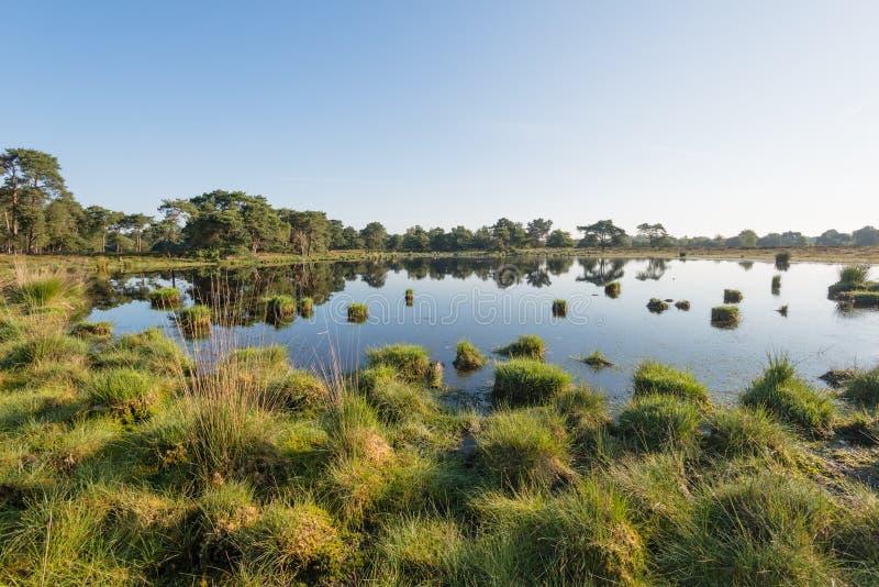 Massa's van gras in een klein moeras royalty-vrije stock afbeeldingen