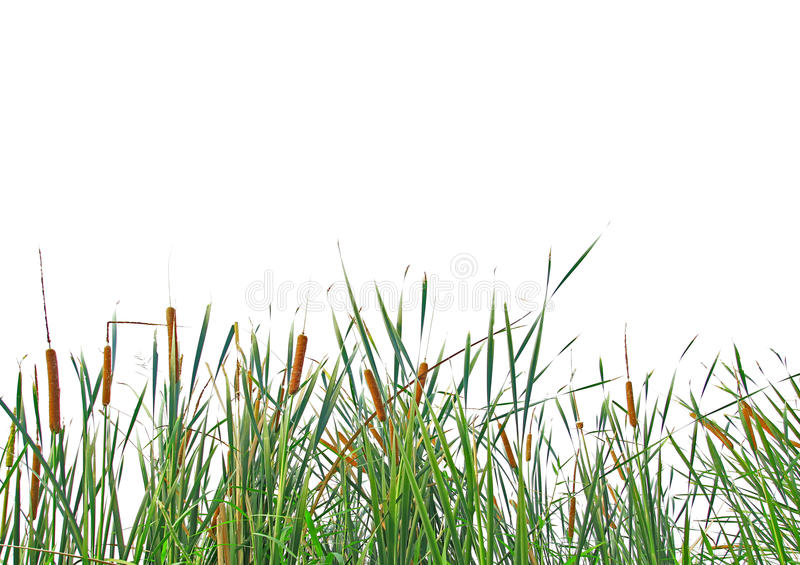 Massa van gras stock foto