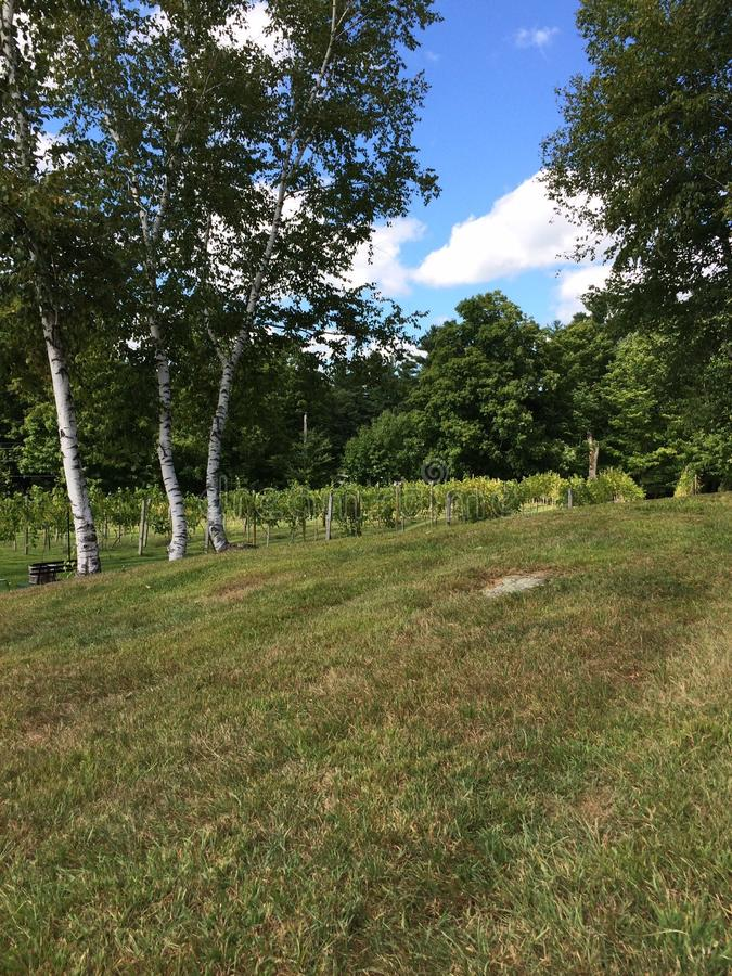 Massachusetts vingård royaltyfri fotografi