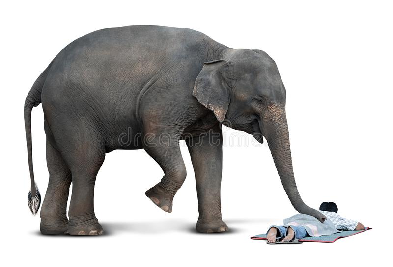 Massage from elephant stock images