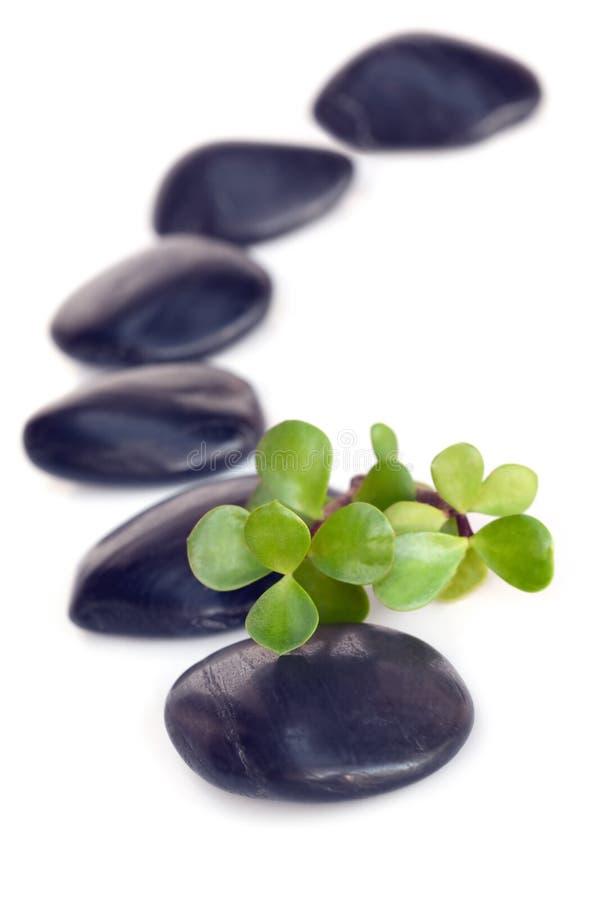 Massage-Steine mit Jade lizenzfreie stockfotografie