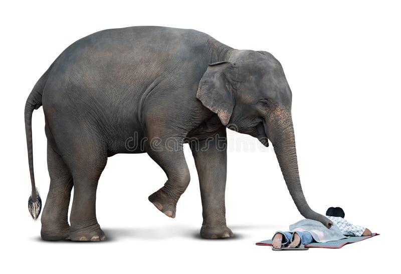 Massage van olifant stock afbeeldingen
