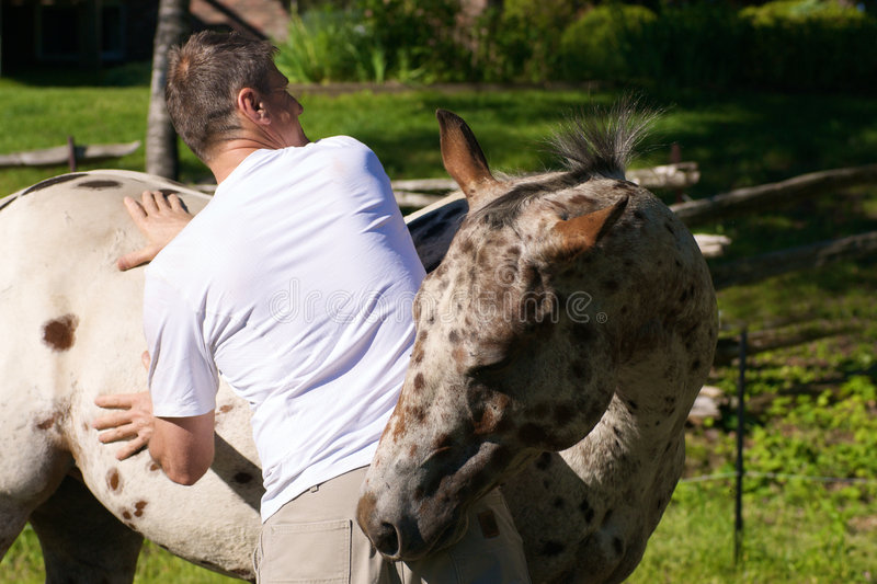 Massaging The Horse Royalty Free Stock Image