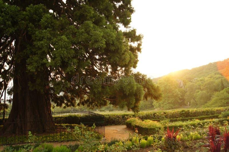 Massandra park obrazy royalty free