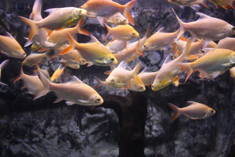 Masse der Fische stockbild