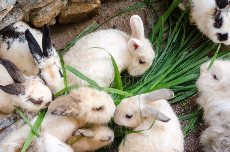 Massen beschmutzten Kaninchen stockfotos