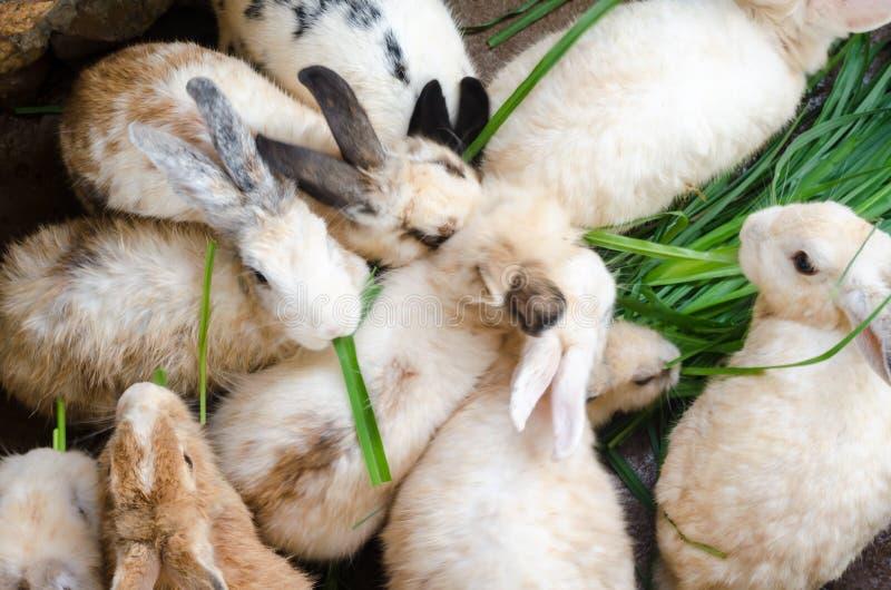 Massen beschmutzten Kaninchen lizenzfreies stockfoto