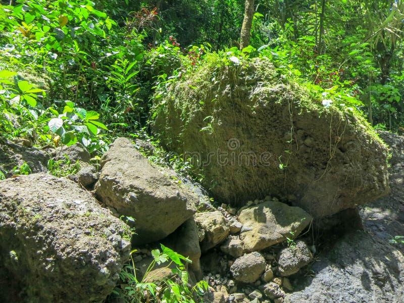 Massi enormi nella vegetazione selvaggia della foresta pluviale tropicale ed in molte belle piante Colore verde di tutte le tonal fotografia stock