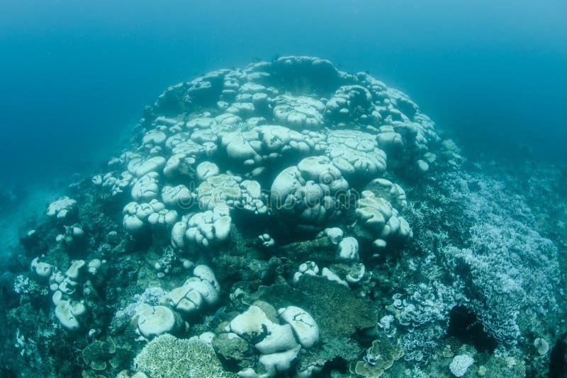 Massieve Coral Bleaching in Indonesië stock afbeeldingen