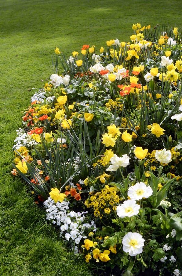 Download Massif Des Fleurs Jaunes, Oranges Et Blanches Photo stock , Image  du fleur,