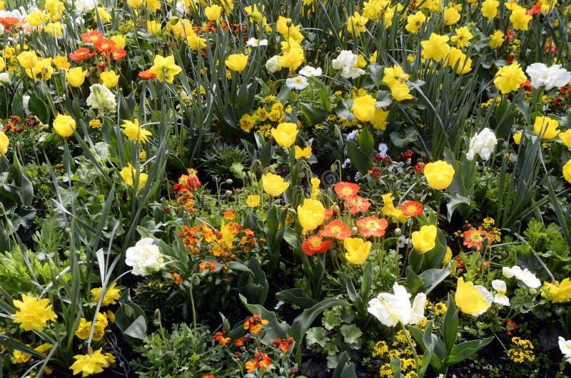 Download Massif Des Fleurs Jaunes, Oranges Et Blanches Photo stock , Image  du jardin,