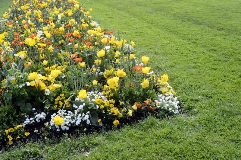 Download Massif Des Fleurs Jaunes, Oranges Et Blanches Photo stock , Image  du bouquet,