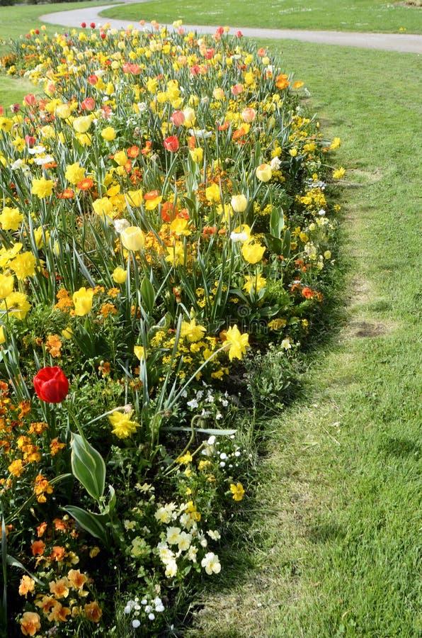 Download Massif Des Fleurs Jaunes, Oranges Et Blanches Image stock , Image  du detail,