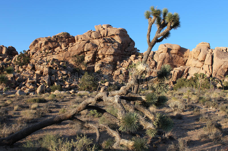 Massive Granite Boulders - Joshua Tree