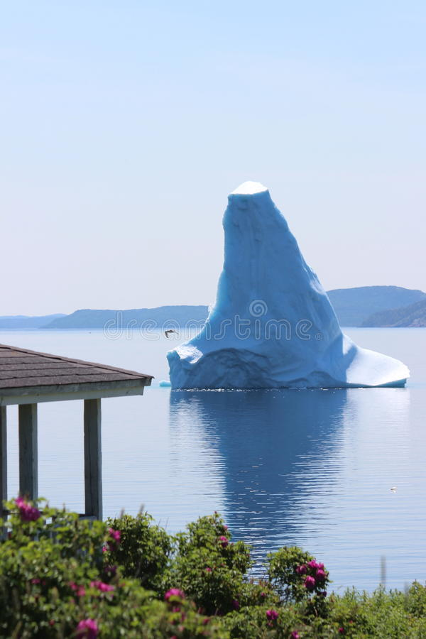 Massive Iceberg. That looks like a sea monster in Bonavista Bay Newfoundland canada in summer community of Open Hall house flowers roses royalty free stock photography