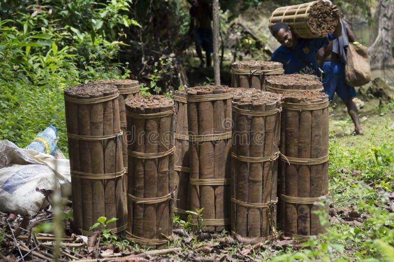 Massoia drewna pliki zdjęcie stock