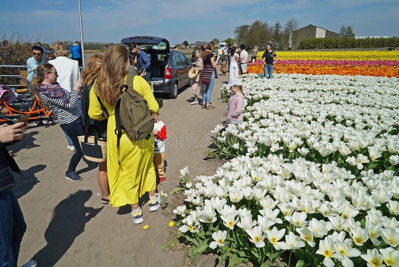 Massor av besökare önskar att göra foto mellan de färgrika tulporna arkivfoton