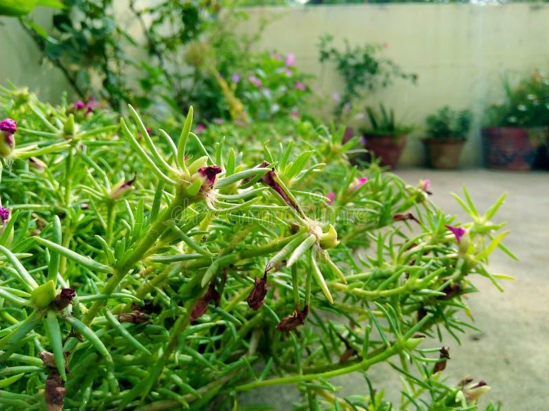Massor av gröna växter i regnig säsong royaltyfri bild