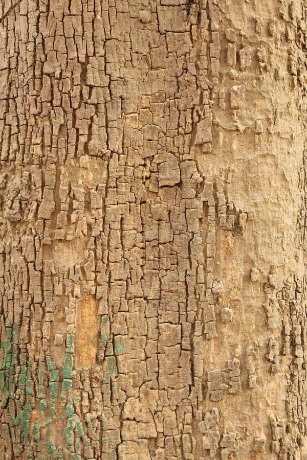 Mast Tree Bark texture stock photos