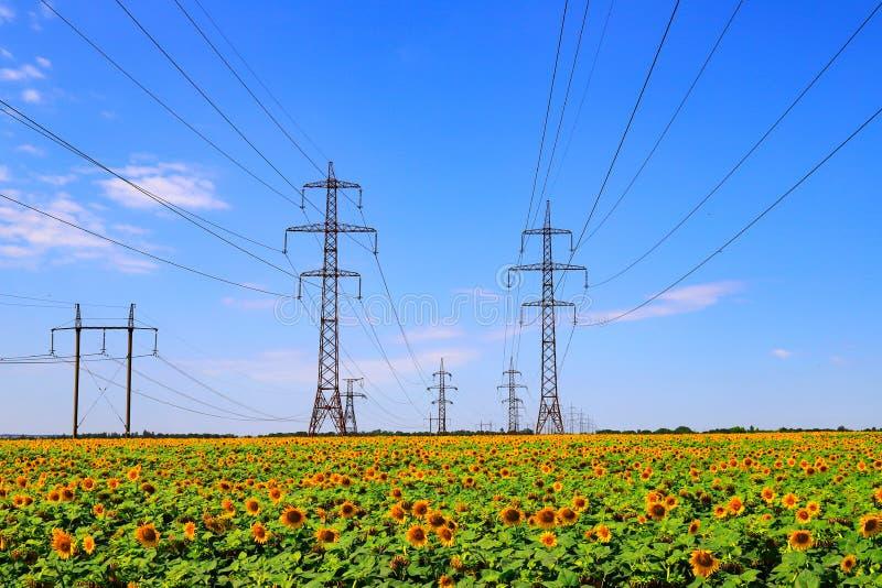 Maste einer Hochspannungsleitung vor dem hintergrund eines Feldes mit Sonnenblume Stahlunterstützungen und Drähte leistung stockfotos