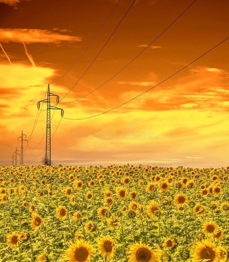 Masten de met hoog voltage van de machtslijn op het gebied van zonnebloemen, zonsonderganghemel royalty-vrije stock afbeelding