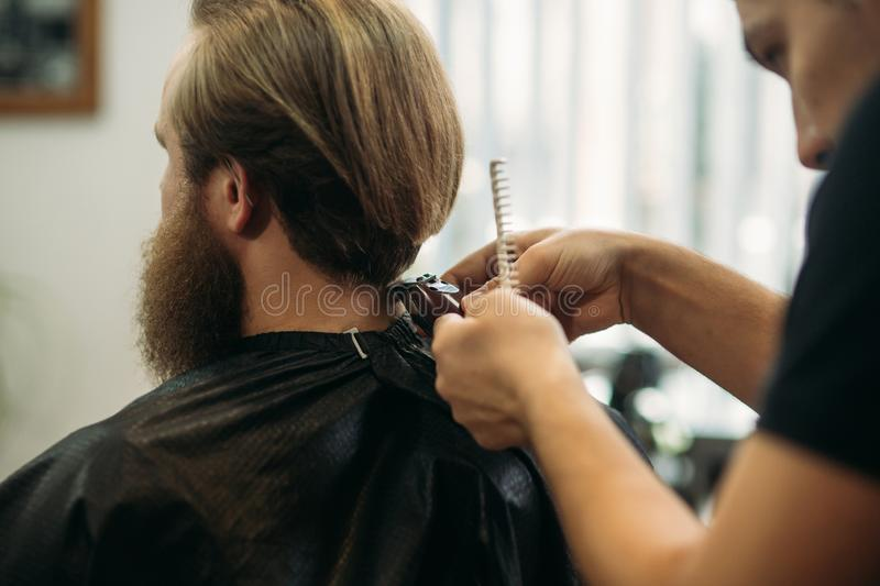 Master cuts hair and beard of men in the barbershop, hairdresser makes hairstyle for a young man royalty free stock images