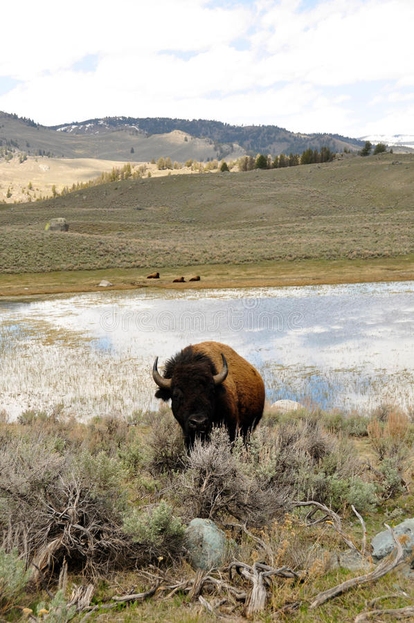 Download Master of the Domain stock photo. Image of water, yellowstone - 25393462