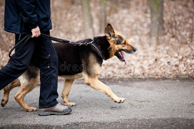 Master and his obedient dog. Master and his obedient (German Shepherd) dog royalty free stock photography