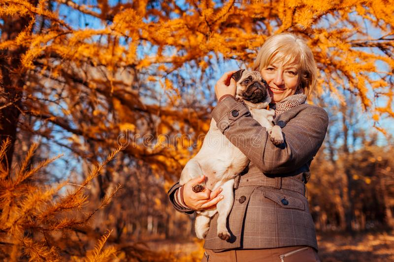 Master walking pug dog in autumn park. Happy woman hugging pet. stock photography
