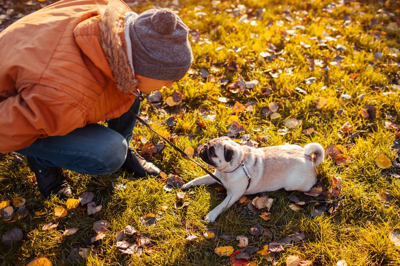 Master walking pug dog in autumn park. Man talking to puppy. Training commands stock images