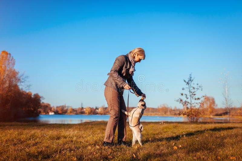 Master walking pug dog in autumn park by river. Happy woman feeding pet. Dog jumping to catch food stock photography