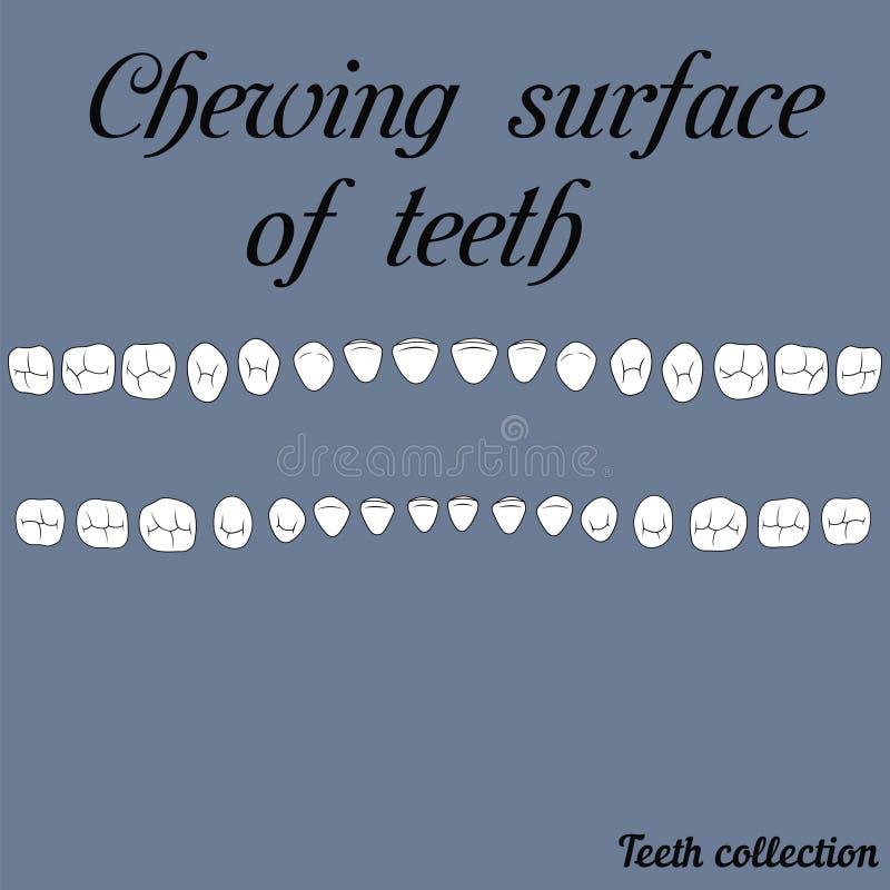 Masticación de la superficie de dientes libre illustration