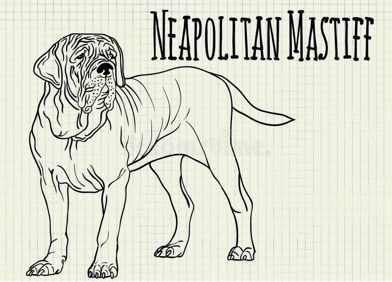 Mastiff napolitain d'illustration sur la feuille de carnet illustration libre de droits