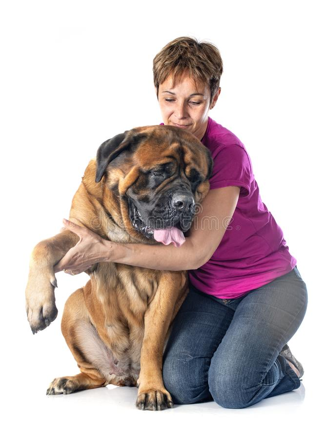 Mastiff och kvinna royaltyfri fotografi