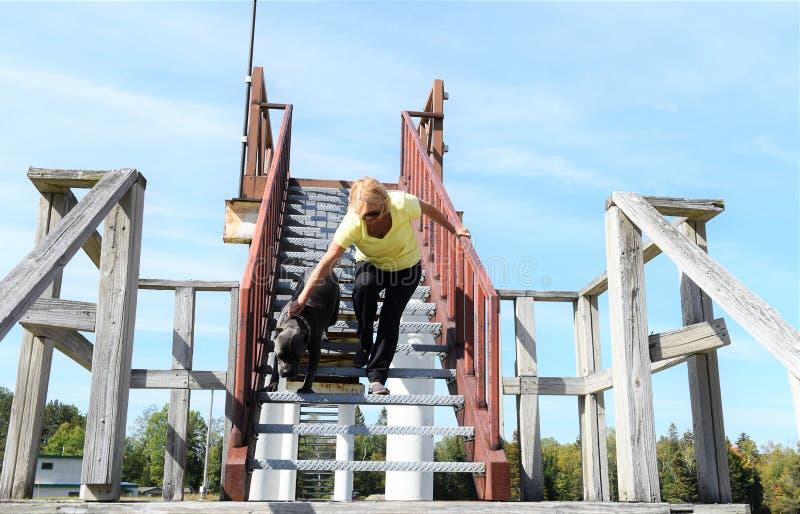 Mastim italiano do corso do bastão em escadas com proprietário fotografia de stock royalty free