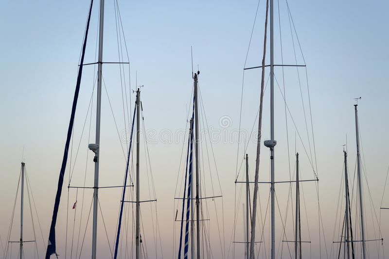 Masts forest stock photography