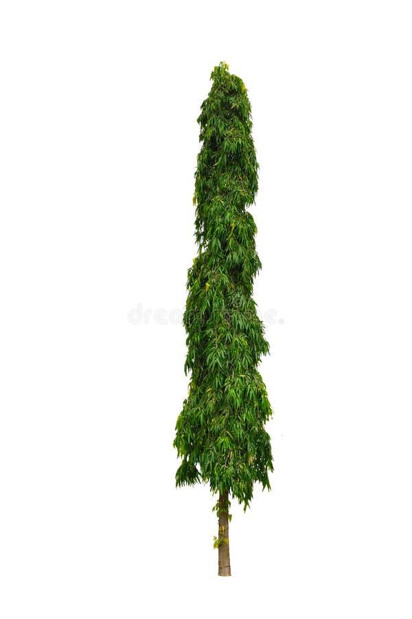 Mastträdet arkivfoton