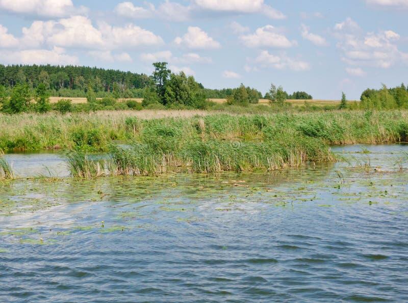Masurianmeer met riet kust-1 royalty-vrije stock afbeelding