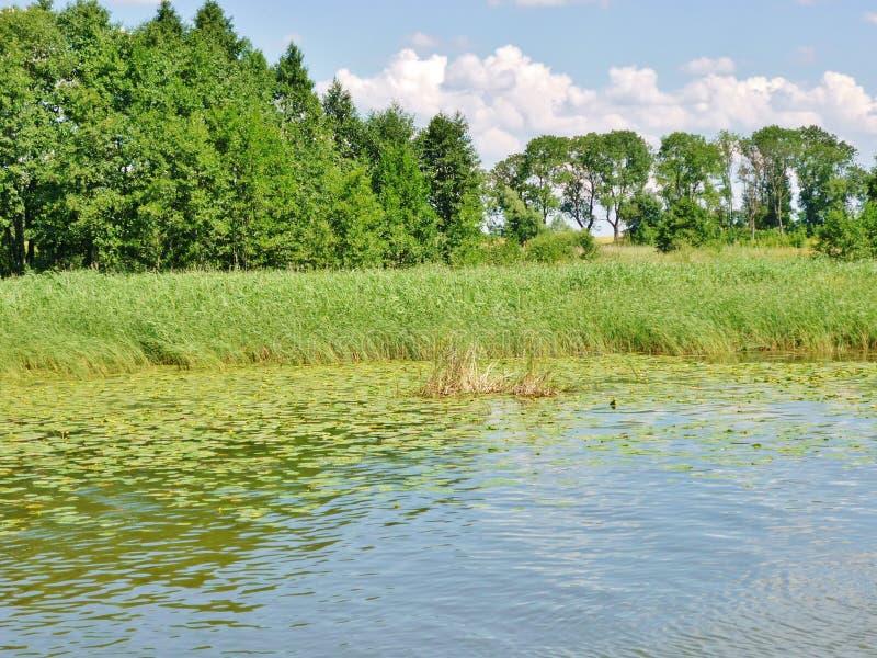 Masurianmeer met rietkust royalty-vrije stock fotografie