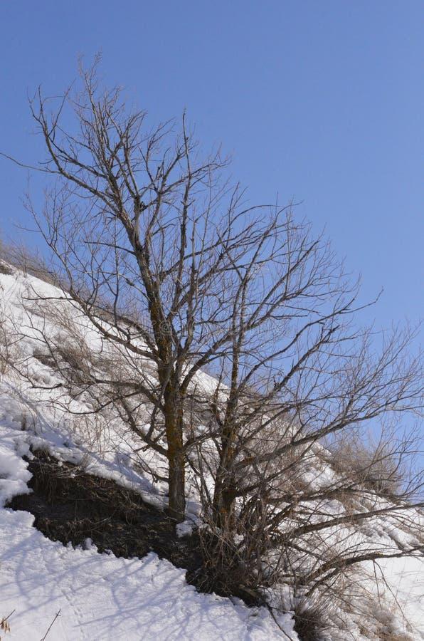 maszerujący Śnieg błyska obraz stock