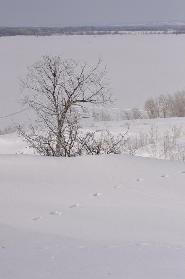 maszerujący Śnieg błyska Bank Volga obrazy stock