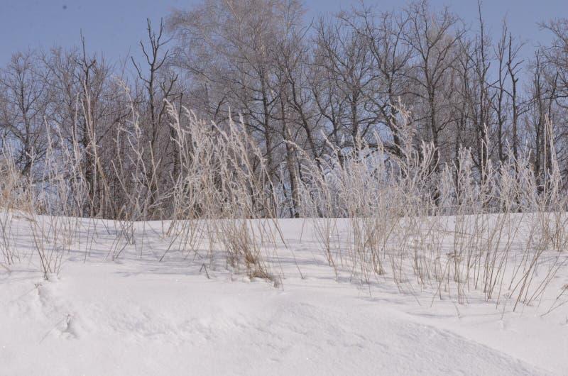 maszerujący Śnieg błyska Bank Volga zdjęcie royalty free