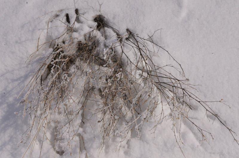 maszerujący Śnieg błyska Bank Volga zdjęcia royalty free