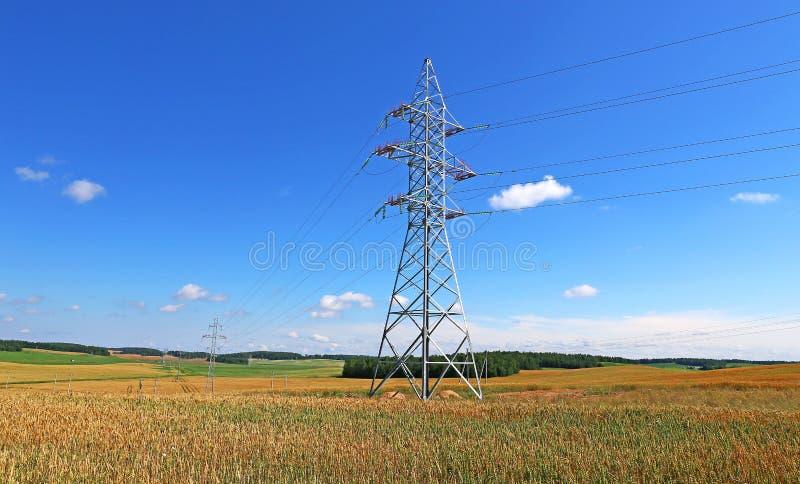 Masztowa elektryczna linia energetyczna w pszenicznym polu fotografia royalty free